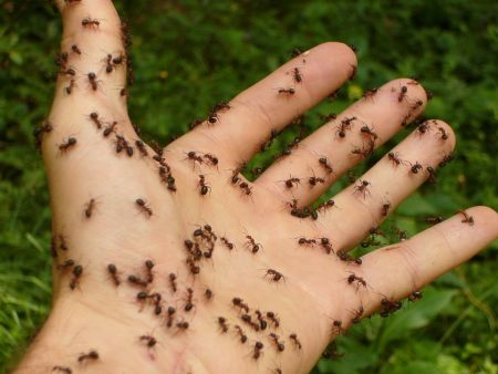 Avoiding an Ant Invasion