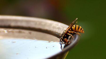 Enjoy a Summer Free of Wasps